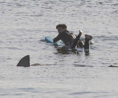 Photo captures surfer's great white shark encounter in Massachusetts