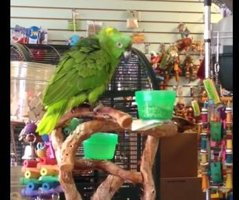 'Awesome' pet store parrot belts 'Lego Movie' theme