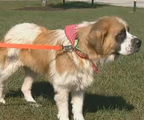 Stolen Colorado dog discovered five years later in Missouri