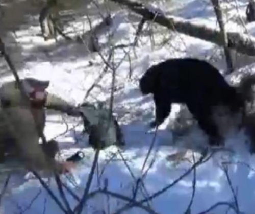 Black bear surprises Vermont researchers at its den