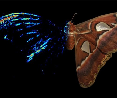 Moths use sound-reflecting wingtips to thwart attacking bats