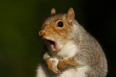 London-police-find-reported-burglar-was-a-squirrel