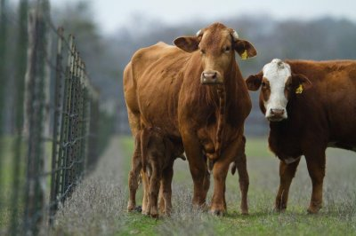 As-drought-persists,-Texas-ranchers-take-stock