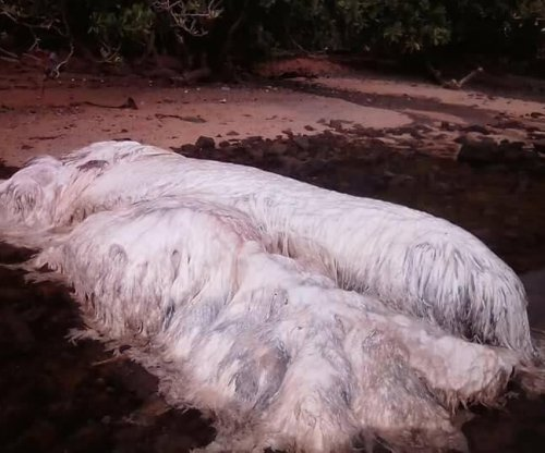 Hairy 'monster' carcass on Philippines beach likely dugong or whale, experts say
