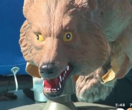 California city using fake coyotes to scare sea lions away from harbor