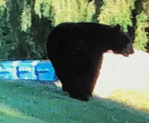 Bear visits high school in Rhode Island