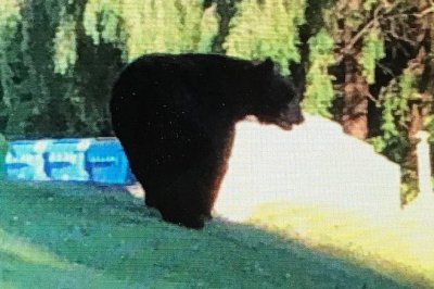 Bear visits high school in Rhode Island
