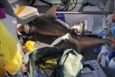 Shark shocks fishing family by jumping into boat