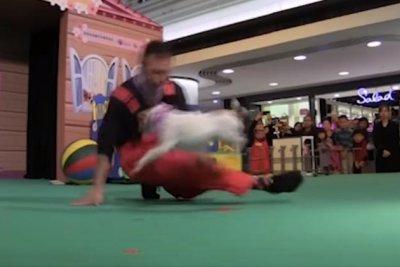Circus dog, owner break Guinness record for leg jumping