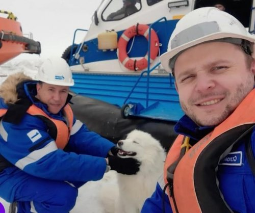 Dog rescued by ship crew after wandering Arctic for over a week