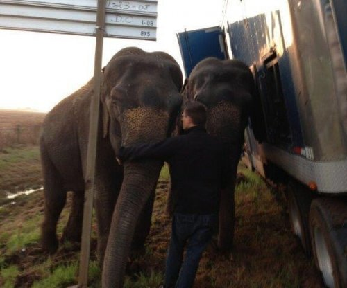 Elephants hold up tipping tractor-trailer in Louisiana