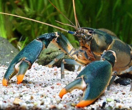 Researchers name new crayfish species after Edward Snowden