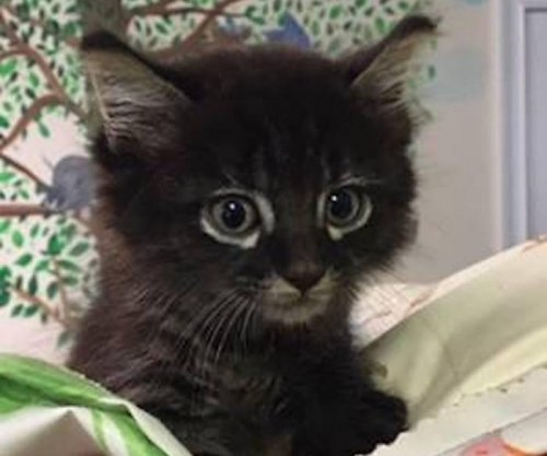 Kitten survives 90-mile trip trapped inside car