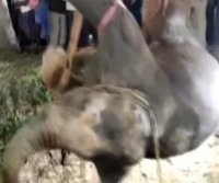 Elephant hoisted out of 55-foot deep well in India