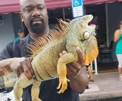 'Suspicious' iguana captured at Florida restaurant