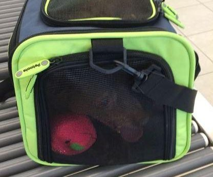 Airport X-ray machine finds handgun, pet dog in traveler's carry-on bags