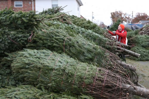 City attempting Christmas tree world record in Michigan