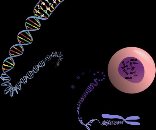 Study: DNA accounts for only half the material in a chromosome