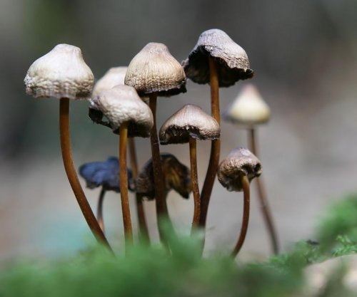 Survey reveals risks, benefits of psilocybin use
