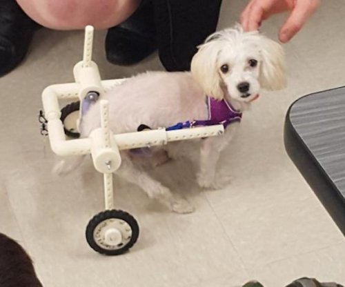 New York students build 'chariot' for abused puppy