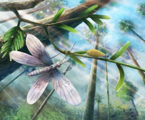 Scientists identify color of ancient fossilized butterfly