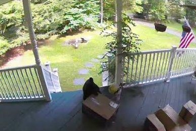 Bear steals package from Pennsylvania porch