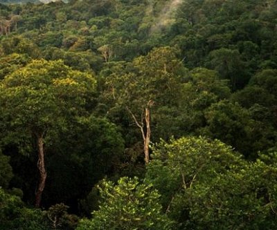 World's most pristine tropical forests remain vulnerable to deforestation