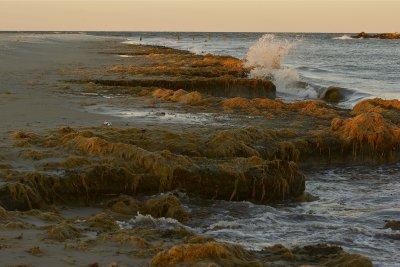 States sue EPA over pollution in Chesapeake Bay