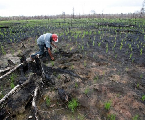 Scientists say North should commit to pay for forest conservation in South