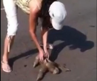 Woman helps sloth cross the road in Northern Brazil
