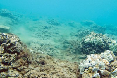 Nitrogen degrading coral in Hawaii traced to wastewater treatment plant
