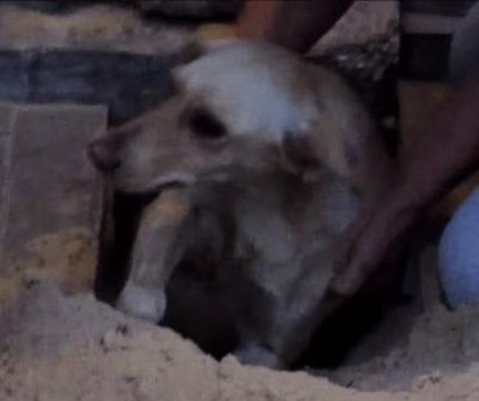 Russian man pries up cobblestones to rescue trapped dog