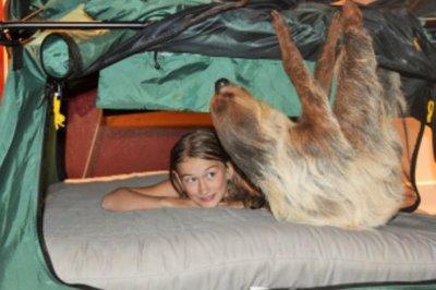 Wildlife center offering 'Sloth Sleepover' experiences