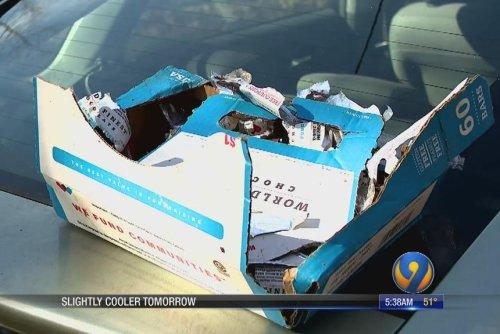 Bears break into car, eat 49 candy bars
