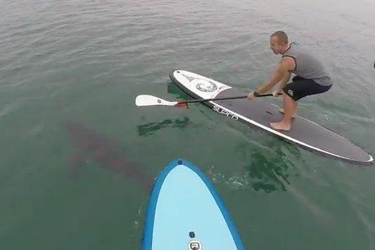 Watch Paddle Boarders Film Sharks Off California Coast