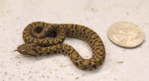 Alabama man finds venomous snake clogging toilet during bathroom break