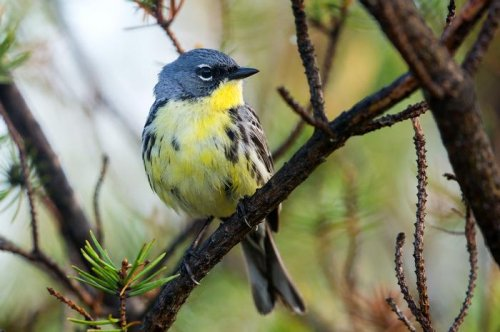 As birds migrate, the microbes in their gut evolve