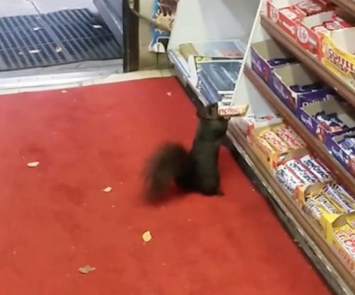 Toronto convenience store looks to combat serial squirrel thieves