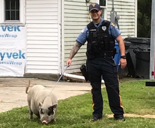 New Jersey police lasso loose pig in residential neighborhood