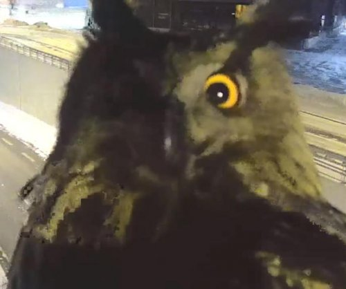 Traffic camera monitors surprised by attention-seeking owl