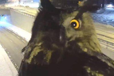 Traffic camera monitors surprised by attention-seeking owl