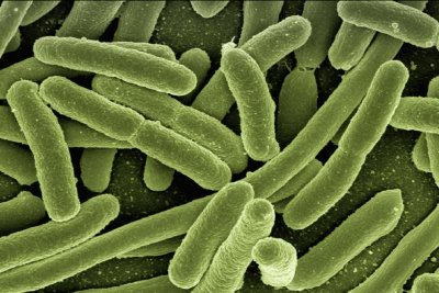 CDC: 'Nightmare bacteria' showing up in U.S.