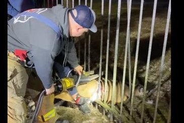 Firefighters use hydraulic tool to rescue deer stuck in iron fence
