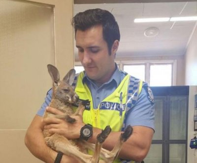 Australian police rescue adopted kangaroo after eagle abduction