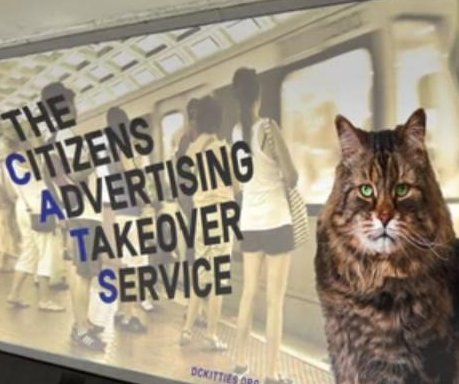 Group seeking to replace D.C. Metro station ads with cat photos
