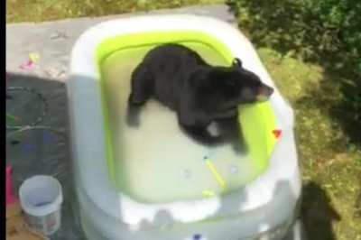 Bear chases kids out of Tennessee backyard pool