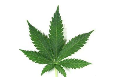 9 of 10 docs unprepared to prescribe marijuana