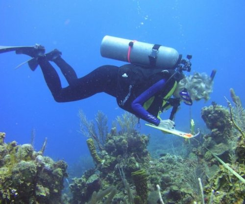 25-year coral survey: Caribbean environmentally stressed