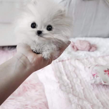 Paris Hilton has a ridiculously tiny $13K dog
