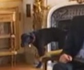 Macron's dog pees on fireplace during on-camera meeting